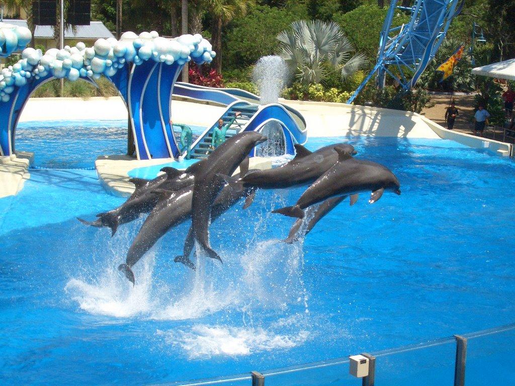 DolphinShow alanya