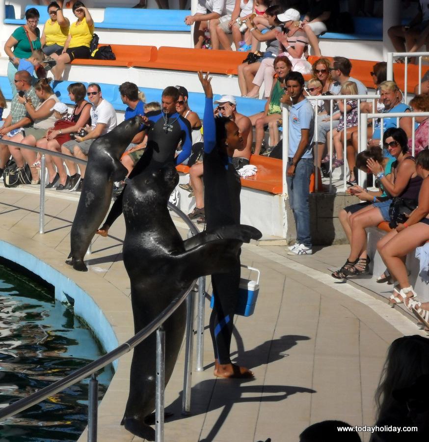 alanya-tour-dolphin
