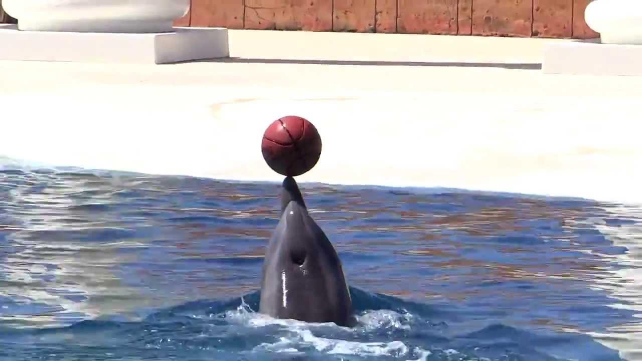 dolphin-alanya