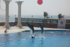 alanya-dolphin-show