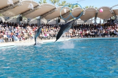 dolphin-show-alanya seapark