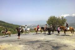 horse-antalya