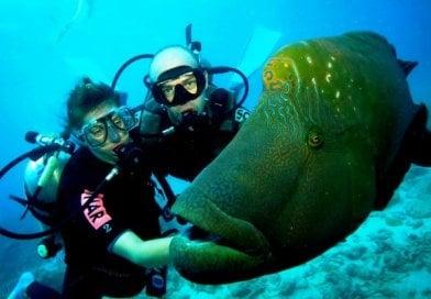 Alanya Scuba Diving 40€