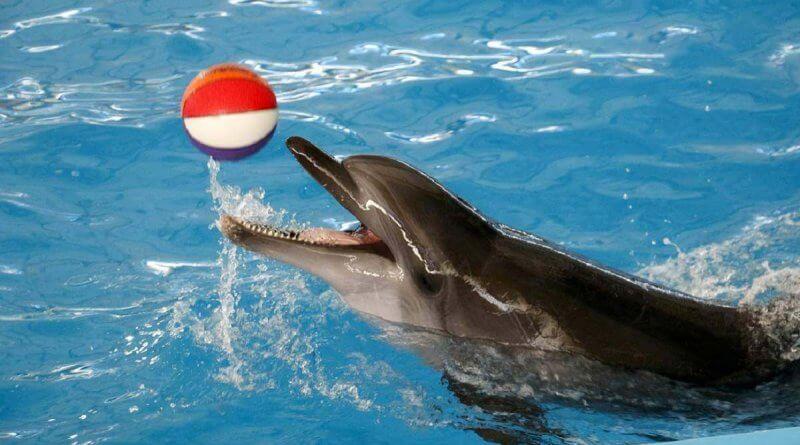 dophin show