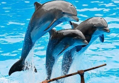 Dolphin Show 25€